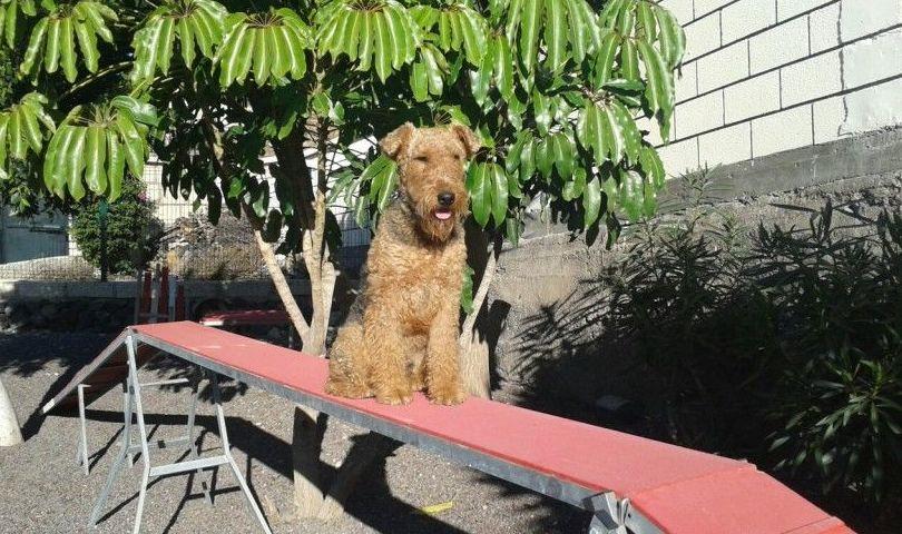 Don Perro, hotel para perros