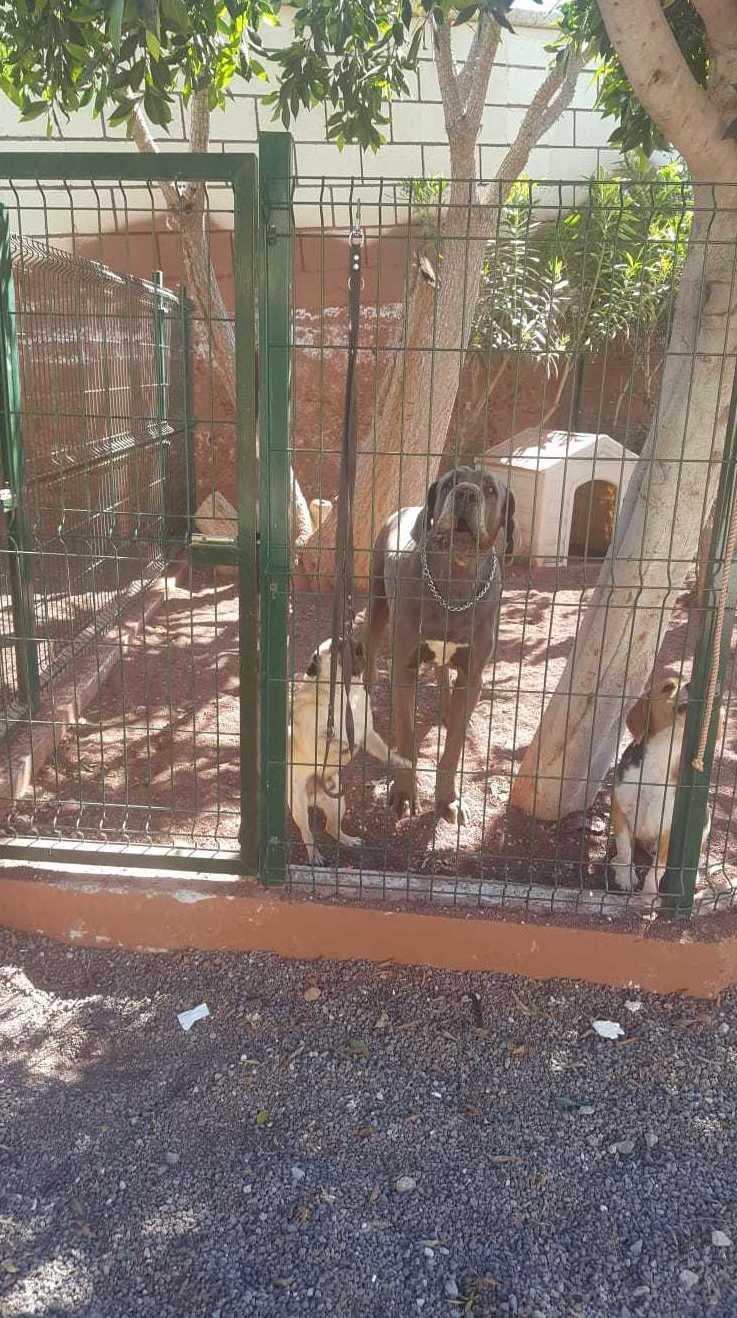Foto 9 de Tiendas de animales en Las Chafiras | Don Perro