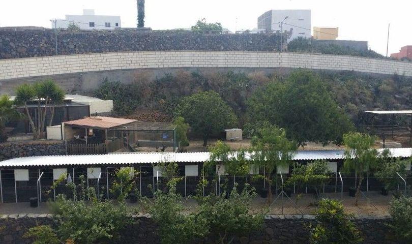 Hotel para perros en el sur de Tenerife