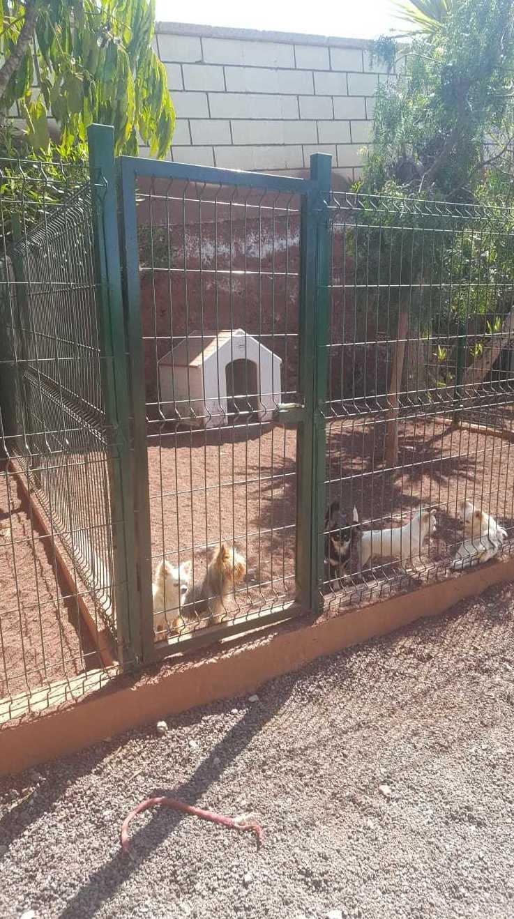 Foto 28 de Tiendas de animales en Las Chafiras | Don Perro