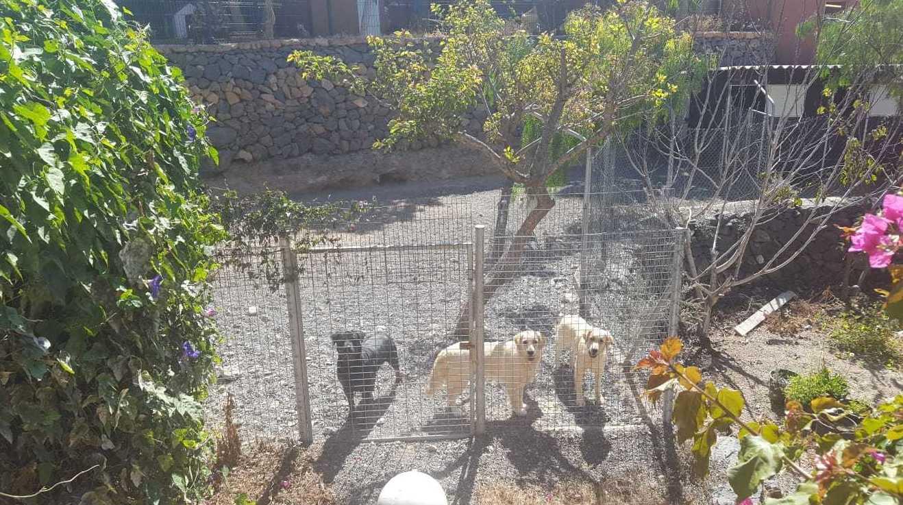 Foto 29 de Tiendas de animales en Las Chafiras | Don Perro
