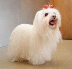 Don Perro, peluquería para perros
