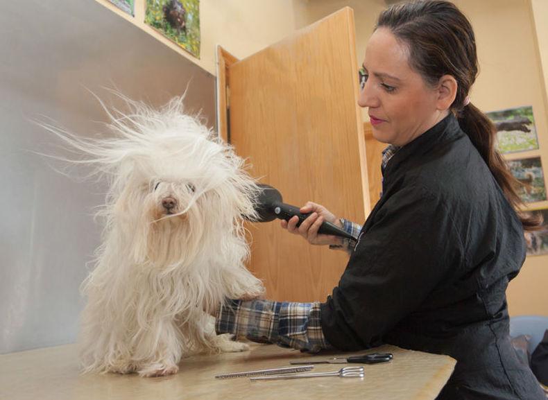 Peluquería canina: CATÁLOGO de Don Perro