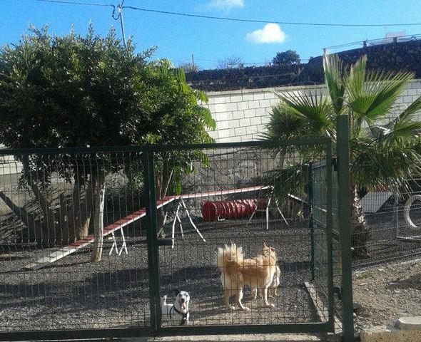 Don Perro, hotel para perros con veterinario y tienda especializada