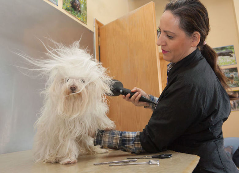 Peluquería canina san miguel de abonaPeluquería canina tenerife