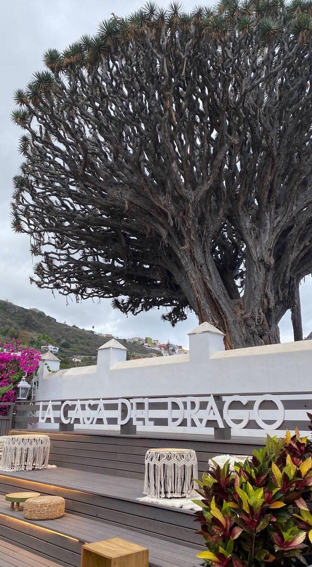 Un rincón especial en Tenerife, bajo el Drago Milenario