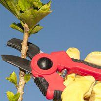 Jardinería: Servicios de Perfumesymas.com