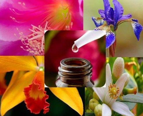 Esencias de Orquideas: Cursos y Terapias de Espacio Agua Coin