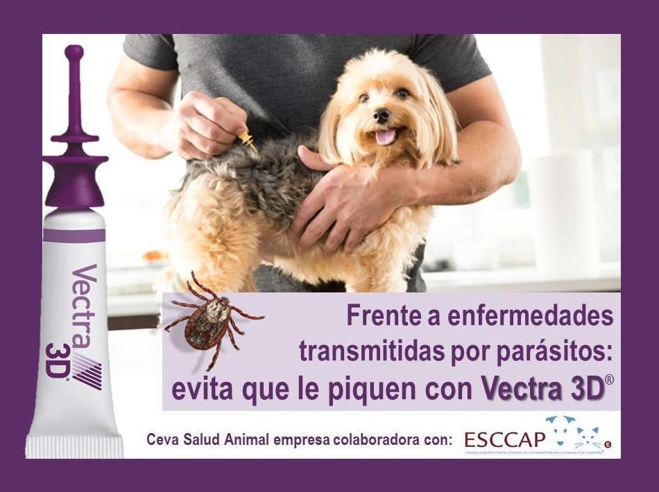Clinica veterinaria  en Barcelona|Clot veterinaria