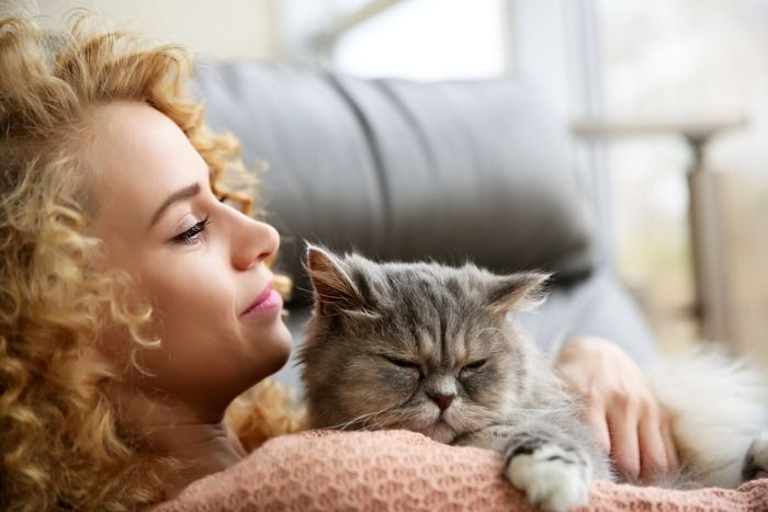 Chequeo de gatos adultos: Servicios de Clot Veterinària