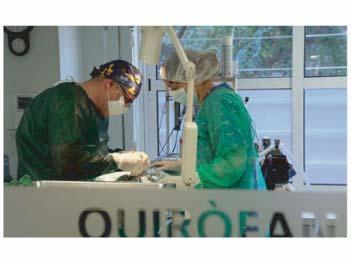 Foto 10 de Veterinarios en Barcelona | Clot Veterinària