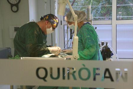 Cirugía general: Servicios de Clot Veterinària