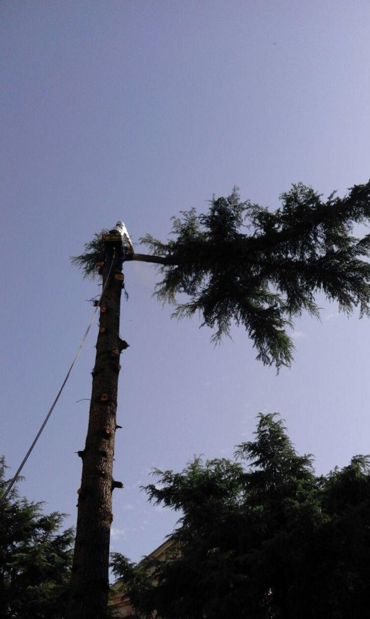 Foto 33 de Trabajos verticales en  | PGA Verticalidad