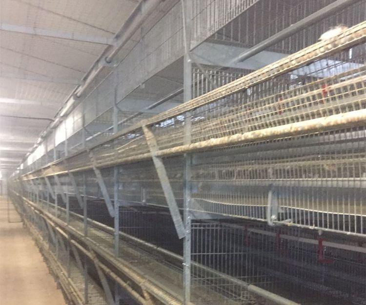 Limpieza de granjas avícolas