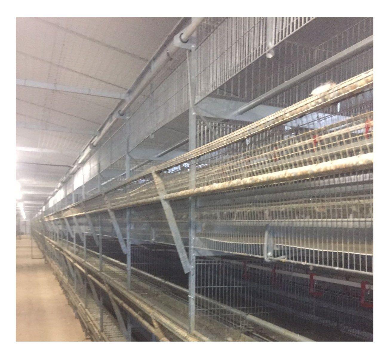 Encalado de granjas: Productos y servicios de Emprenic