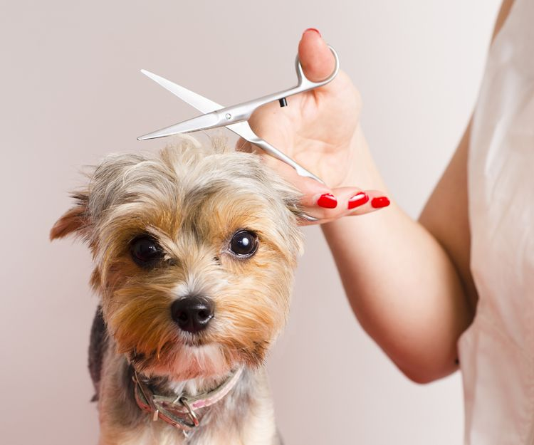Corte de pelo para perros