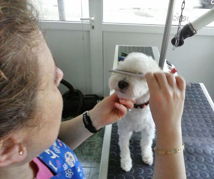Especialistas peluqueros caninos en Barcelona