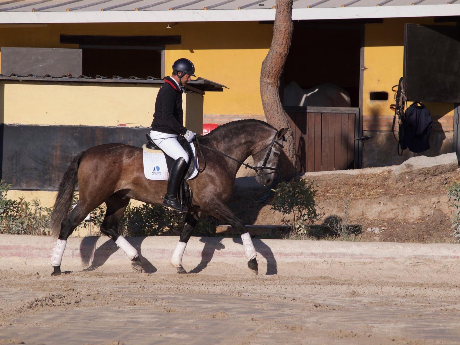 Cursos de equitación en Colmenar Viejo