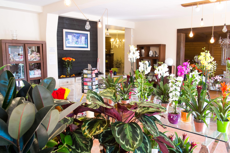 Flores y plantas en Ponferrada