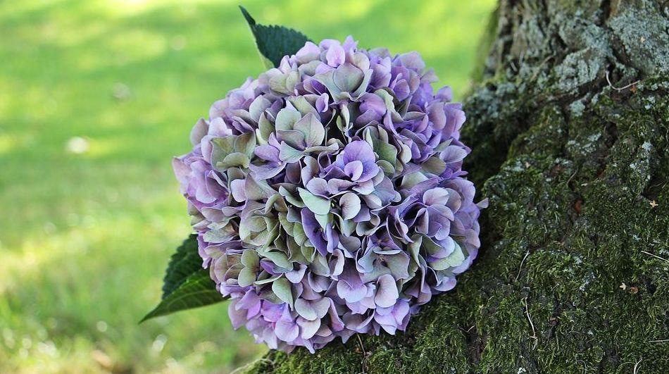 Venta de plantas y árboles ornamentales en el vivero: Servicios  de Flores y viveros Prado