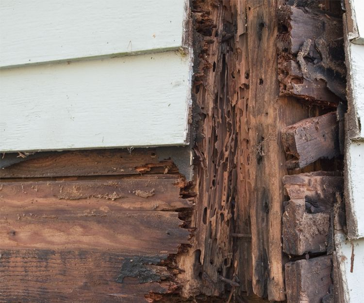Control de plaga de termitas en Murcia