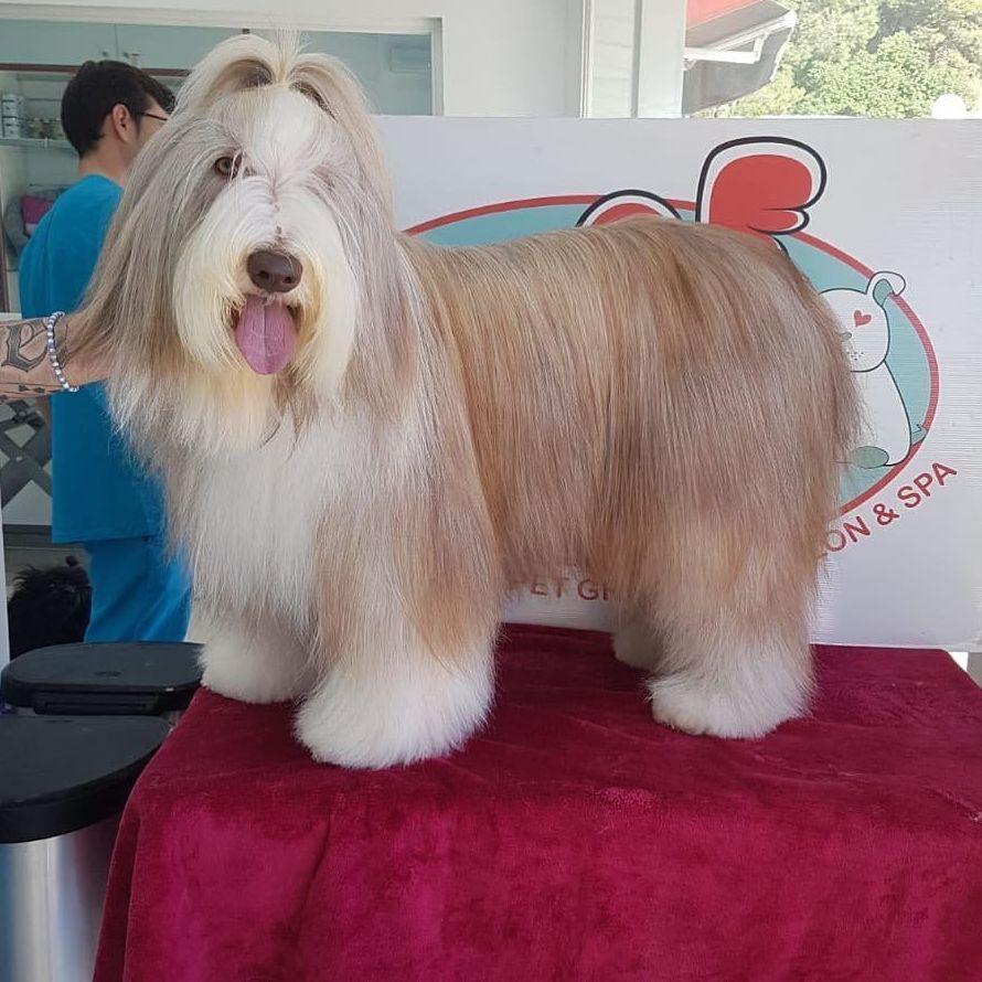 Foto 8 de Peluquerías caninas en Marbella | Academia de Estética Canina Woof Meow
