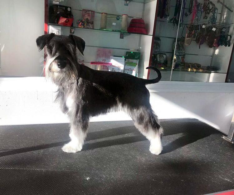 Peluquería canina en Marbella