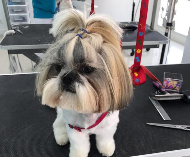 Centro de estética canina en Marbella
