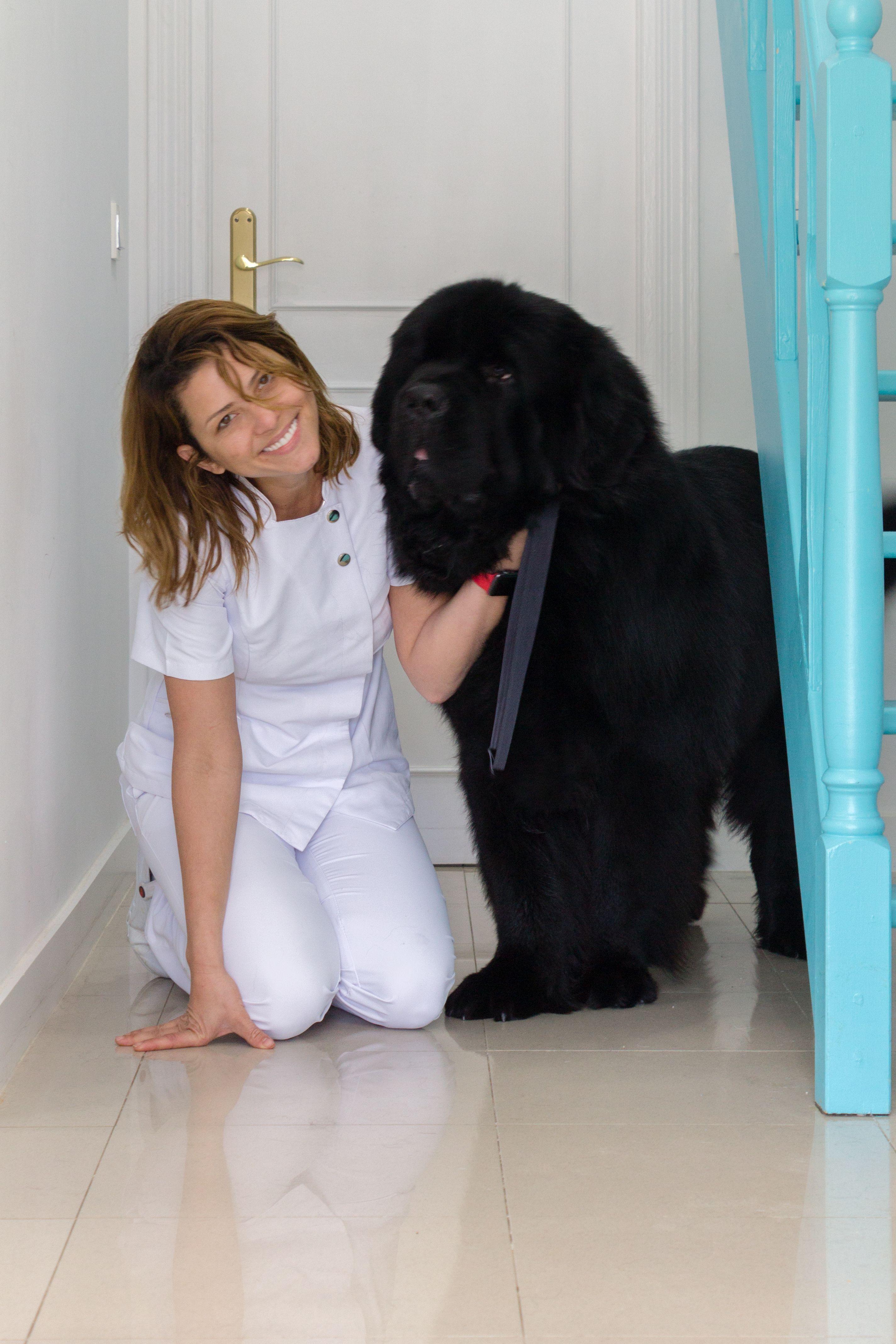 Peluquería canina para perros de cualquier raza en Marbella