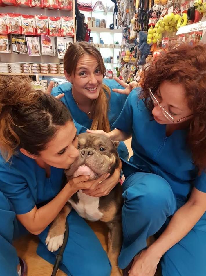 Foto 4 de Peluquerías caninas en Marbella | Academia de Estética Canina Woof Meow