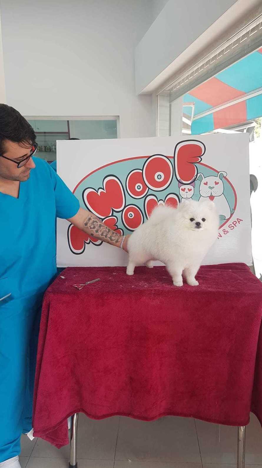 Foto 10 de Peluquerías caninas en Marbella | Academia de Estética Canina Woof Meow