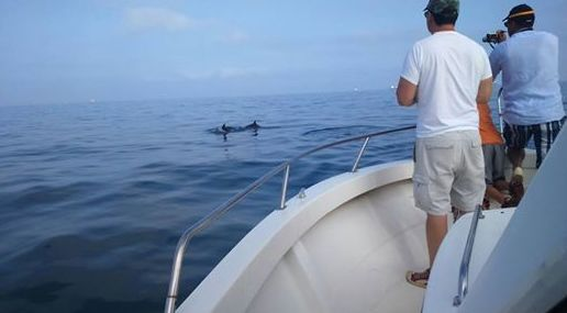 Hoy una hermosa jornada con delfines!!!
