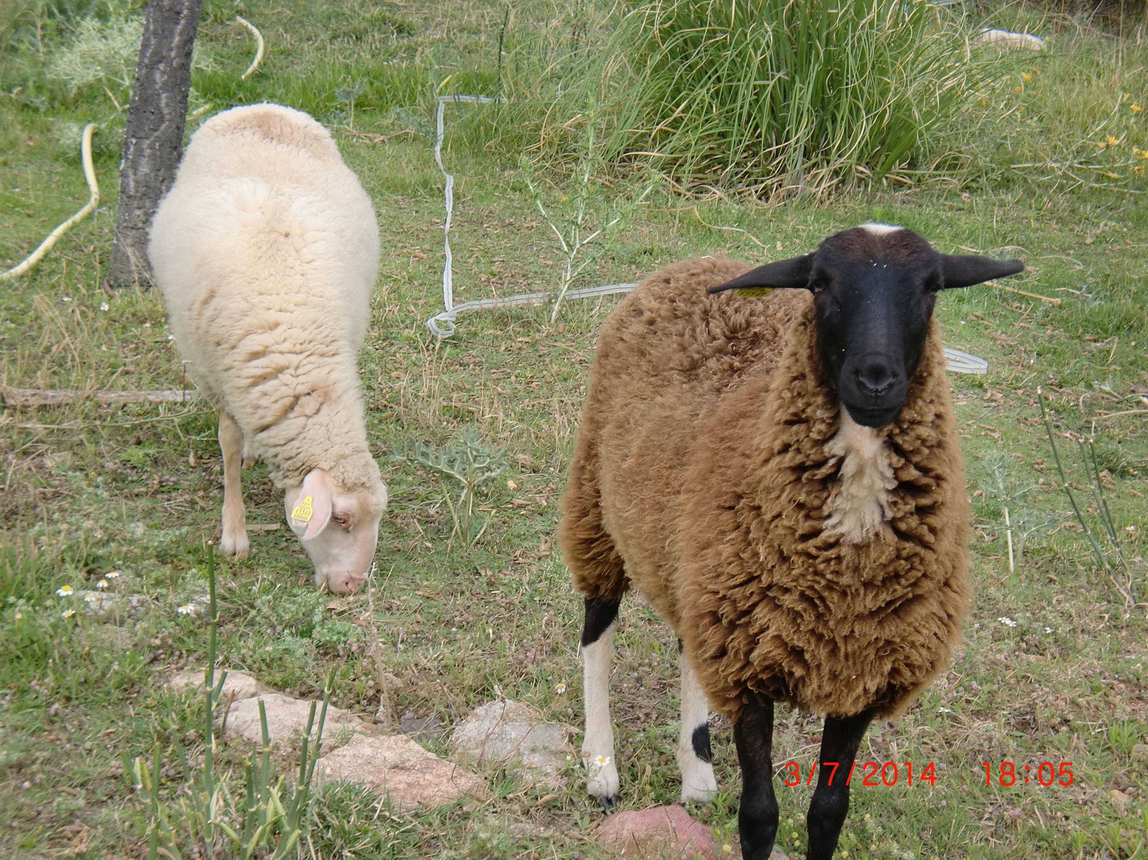 TALLERES DE ANIMALES: actividades de El Trillo Granja Escuela / Deluxe Jardinería