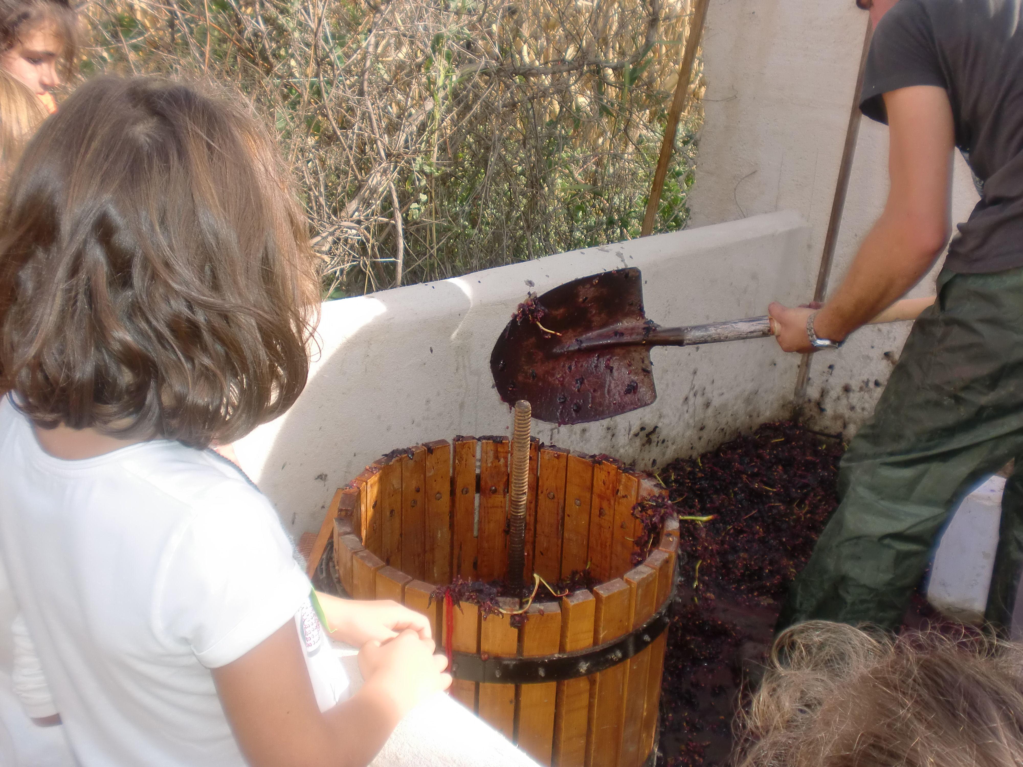 Foto 34 de Granja Escuela en Villaralbo | El Trillo Granja Escuela / Deluxe Jardinería
