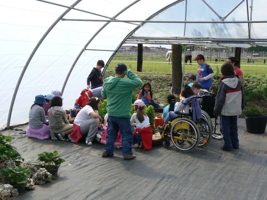 Actividades de horticultura en el invernadero
