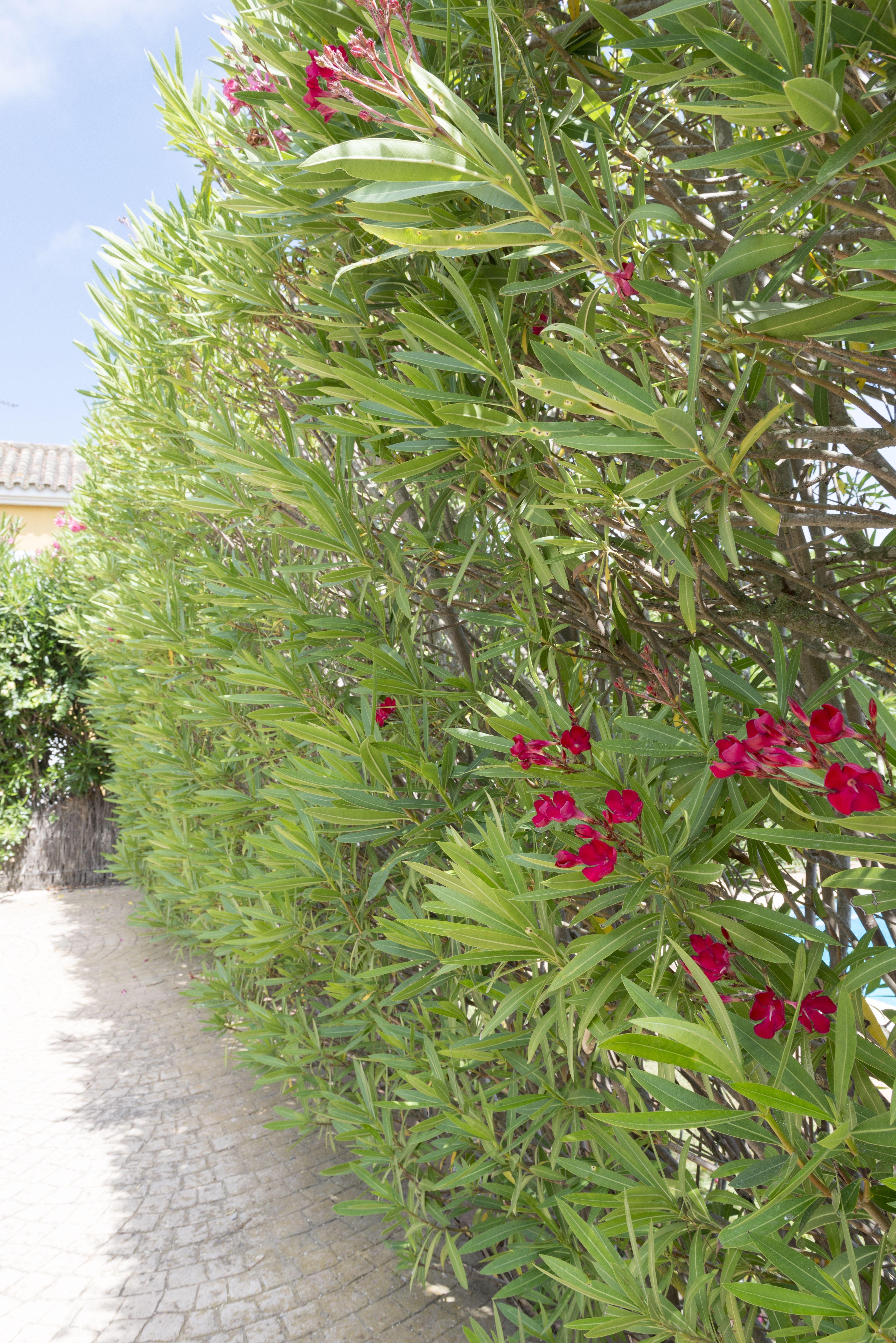 Mantenimiento de jardines y piscinasen Chiclana de la Frontera, Cádiz
