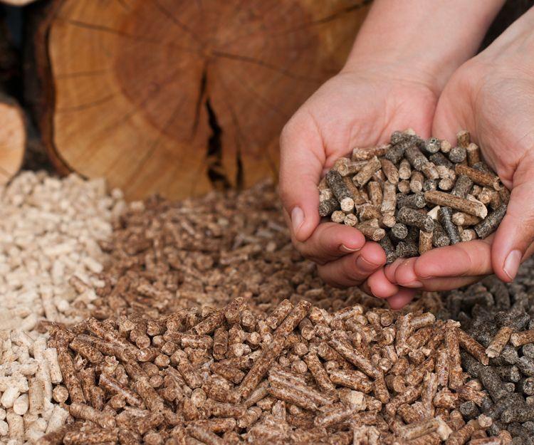 La mejor variedad de pellets