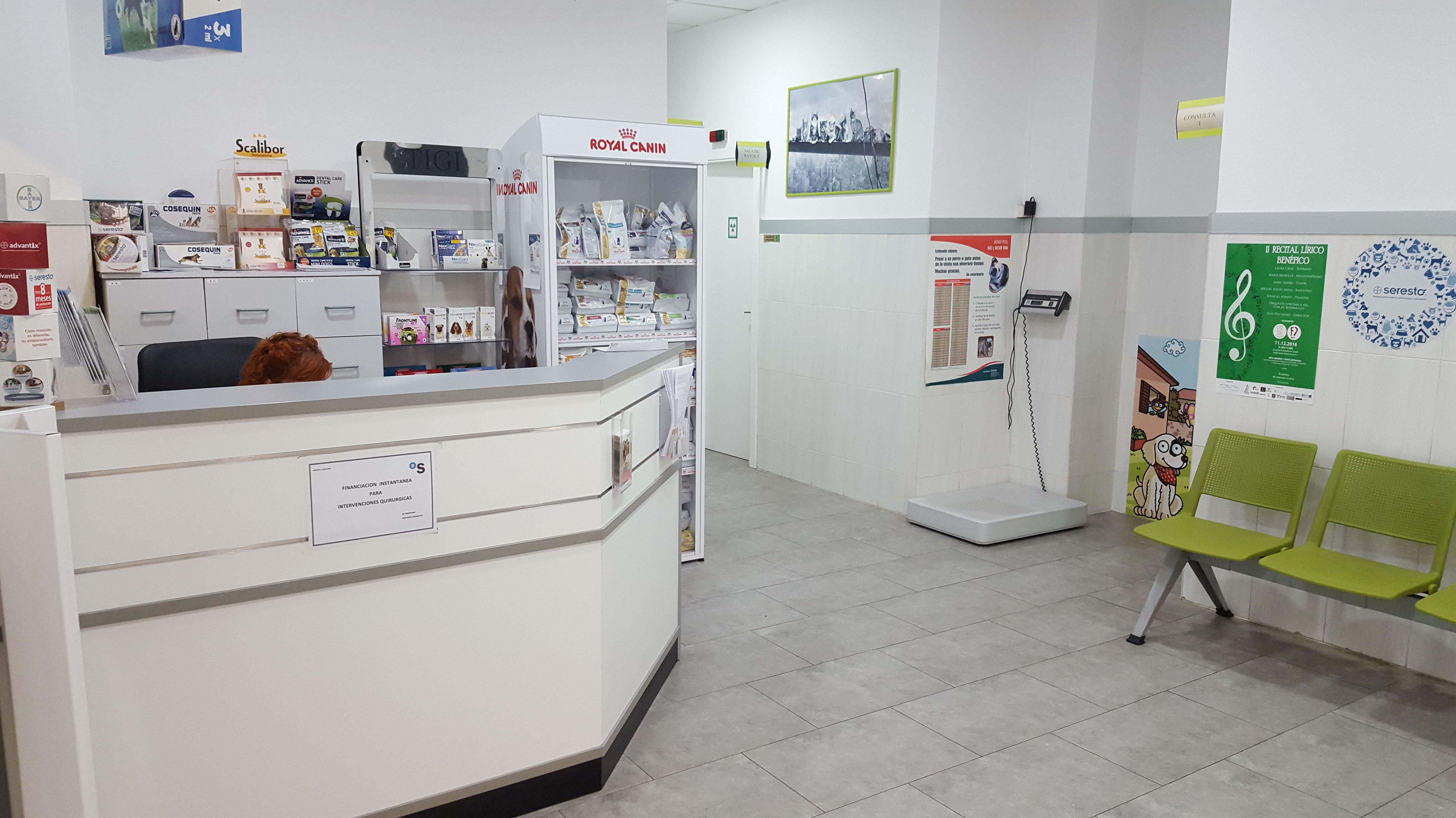 Foto 2 de Veterinarios en Valencia | Clínica Martín Molina