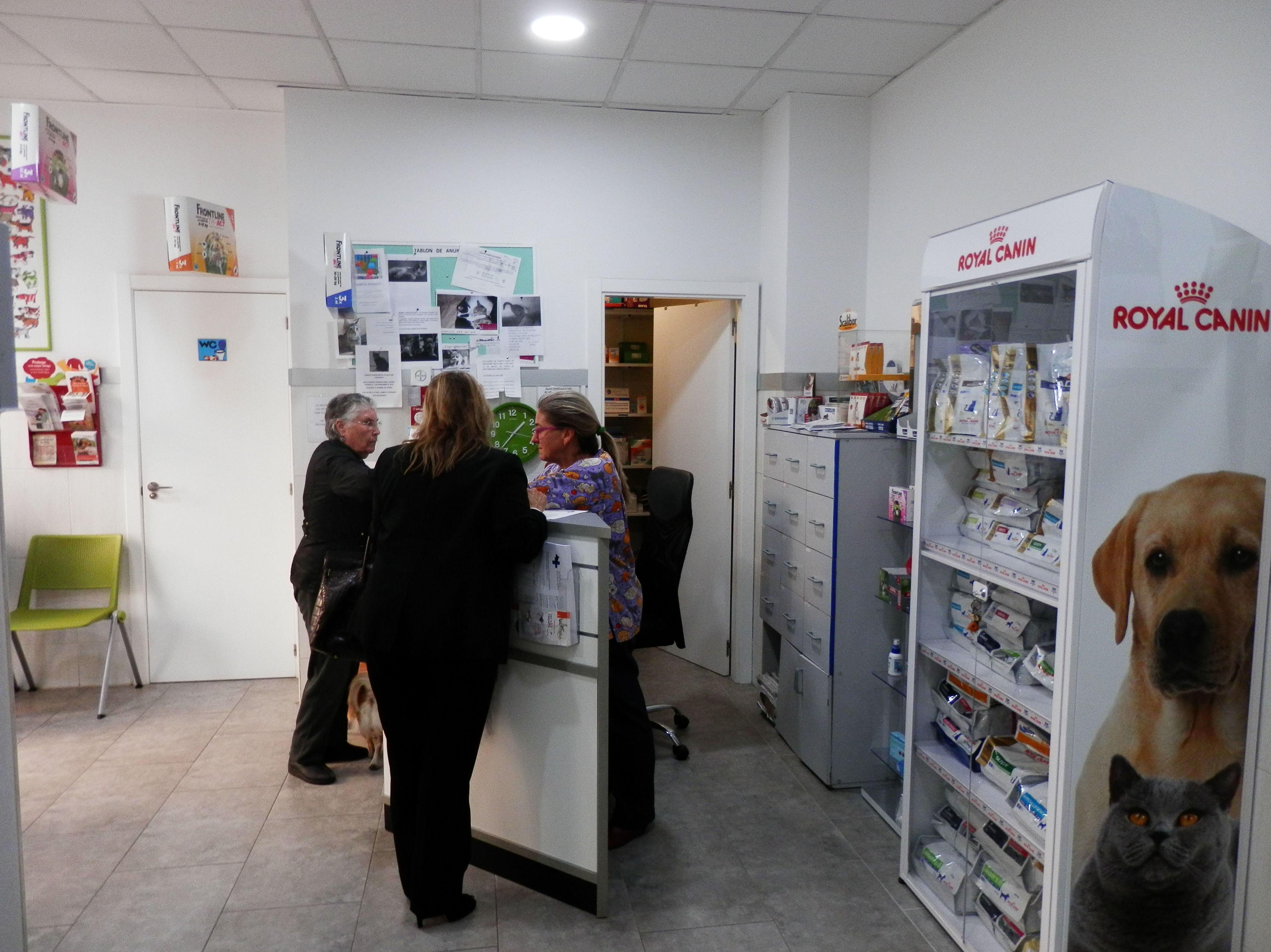 Foto 3 de Veterinarios en Valencia | Clínica Martín Molina