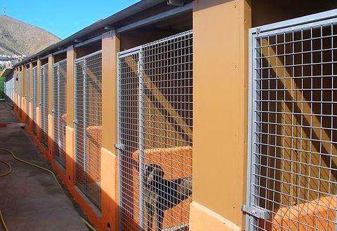 Servicio de residencia canina en Las Palmas de Gran Canaria