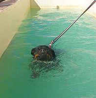 Residencia Canina Tarazona, adiestramiento de perros en Las Palmas de Gran Canaria