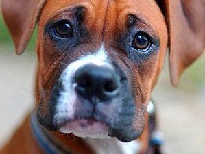 Centro de adiestramiento y cría de perros en Las Palmas de Gran Canaria