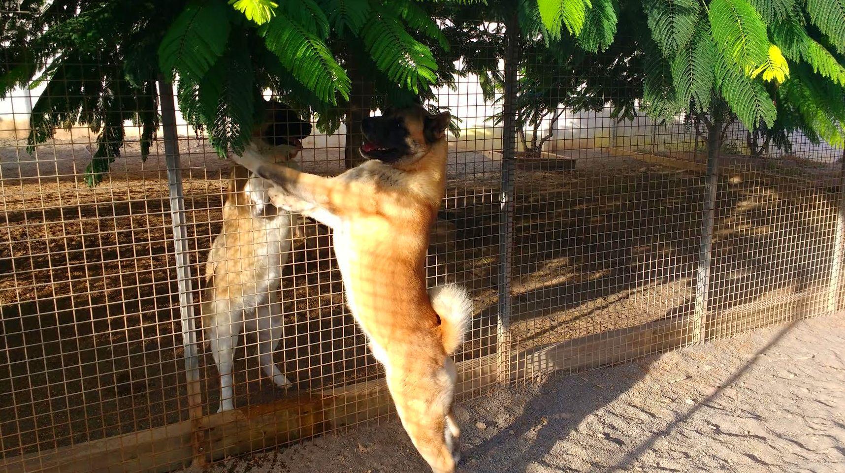 Modificacion de conducta canina Las Palmas de Gran Canaria