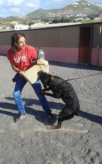 Servicio de adiestramiento canino en Las Palmas de Gran Canaria