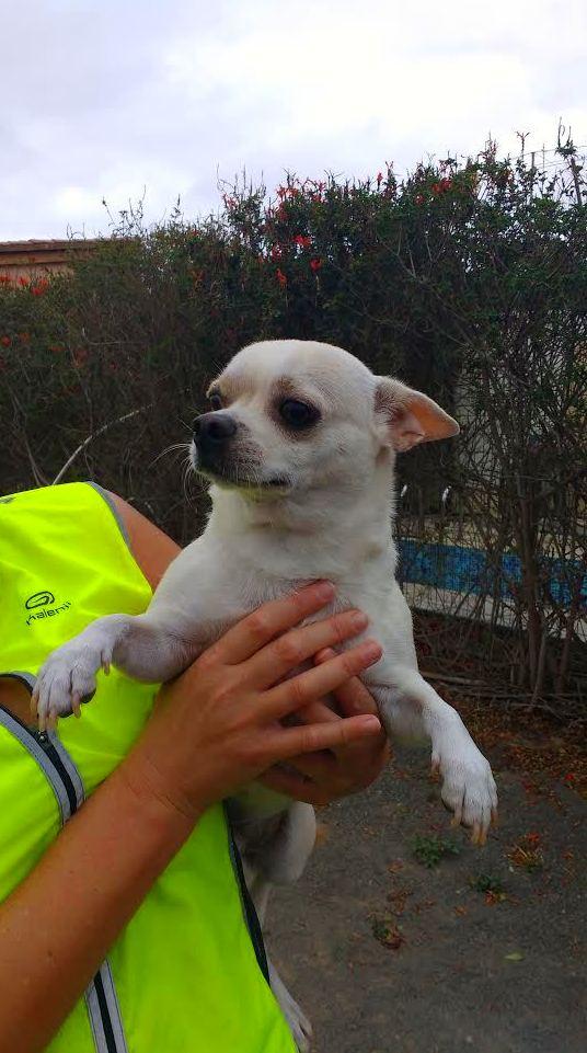 Cachorros disponibles, hijos de campeones en Las Palmas de Gran Canaria