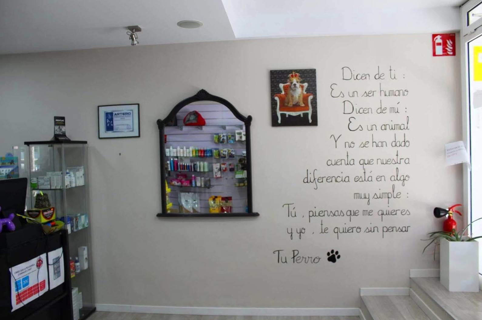 Peluquería canina y felina en Gavá