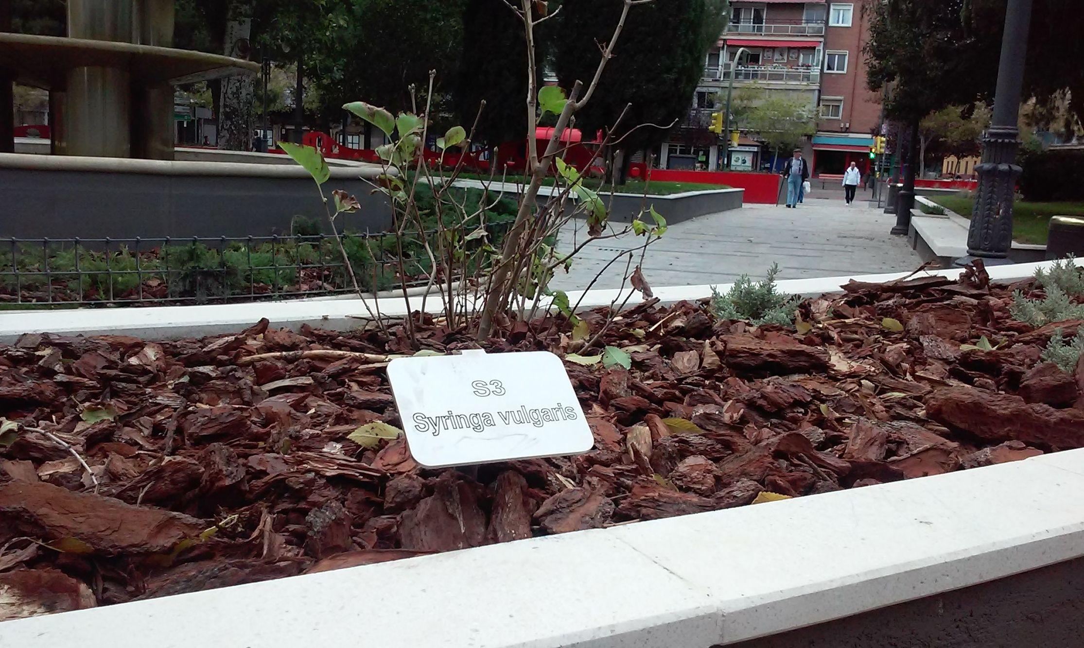 Foto 69 de Diseño y mantenimiento de jardines en  | Danimayos Crea Tu Jardin