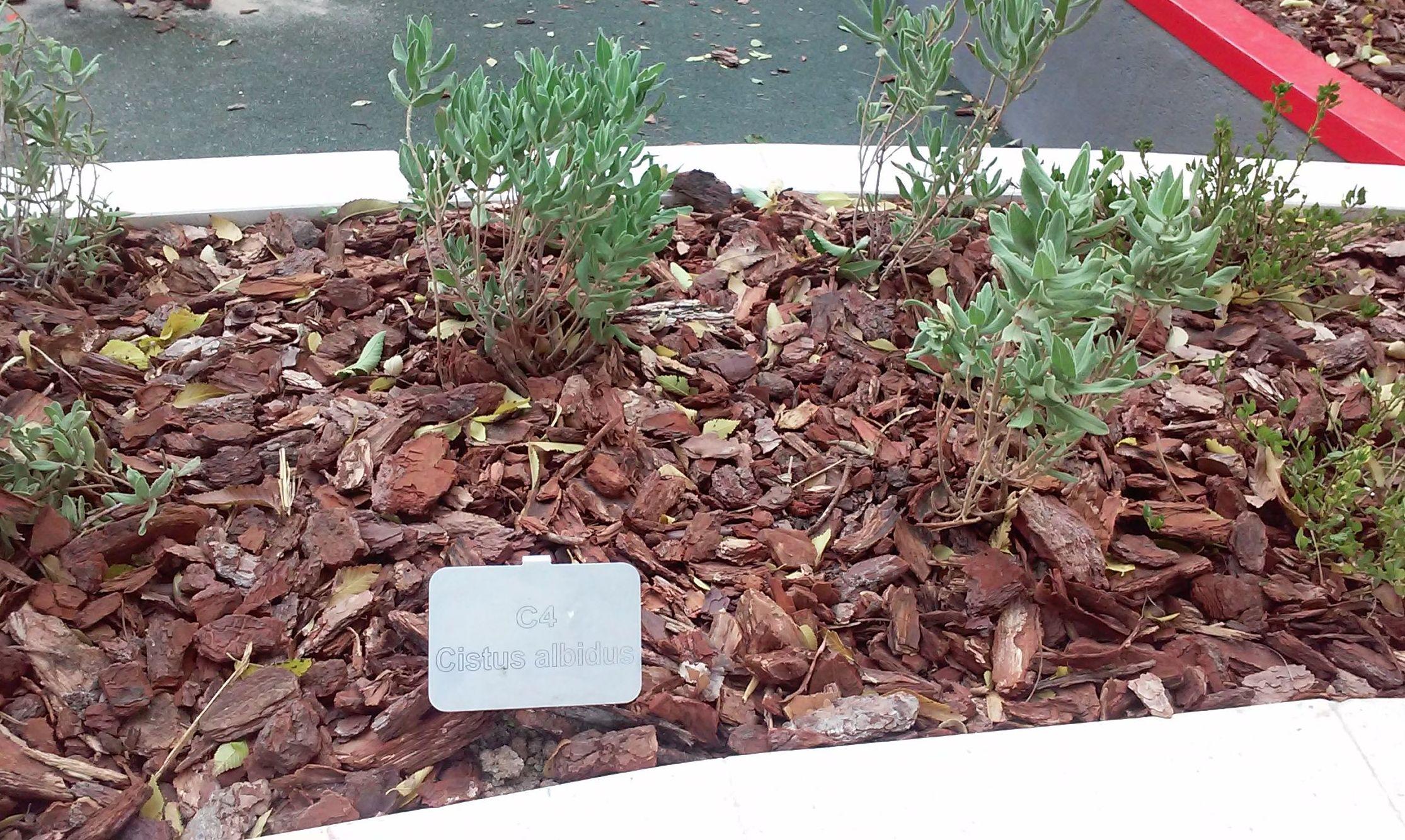 Foto 102 de Diseño y mantenimiento de jardines en  | Danimayos Crea Tu Jardin