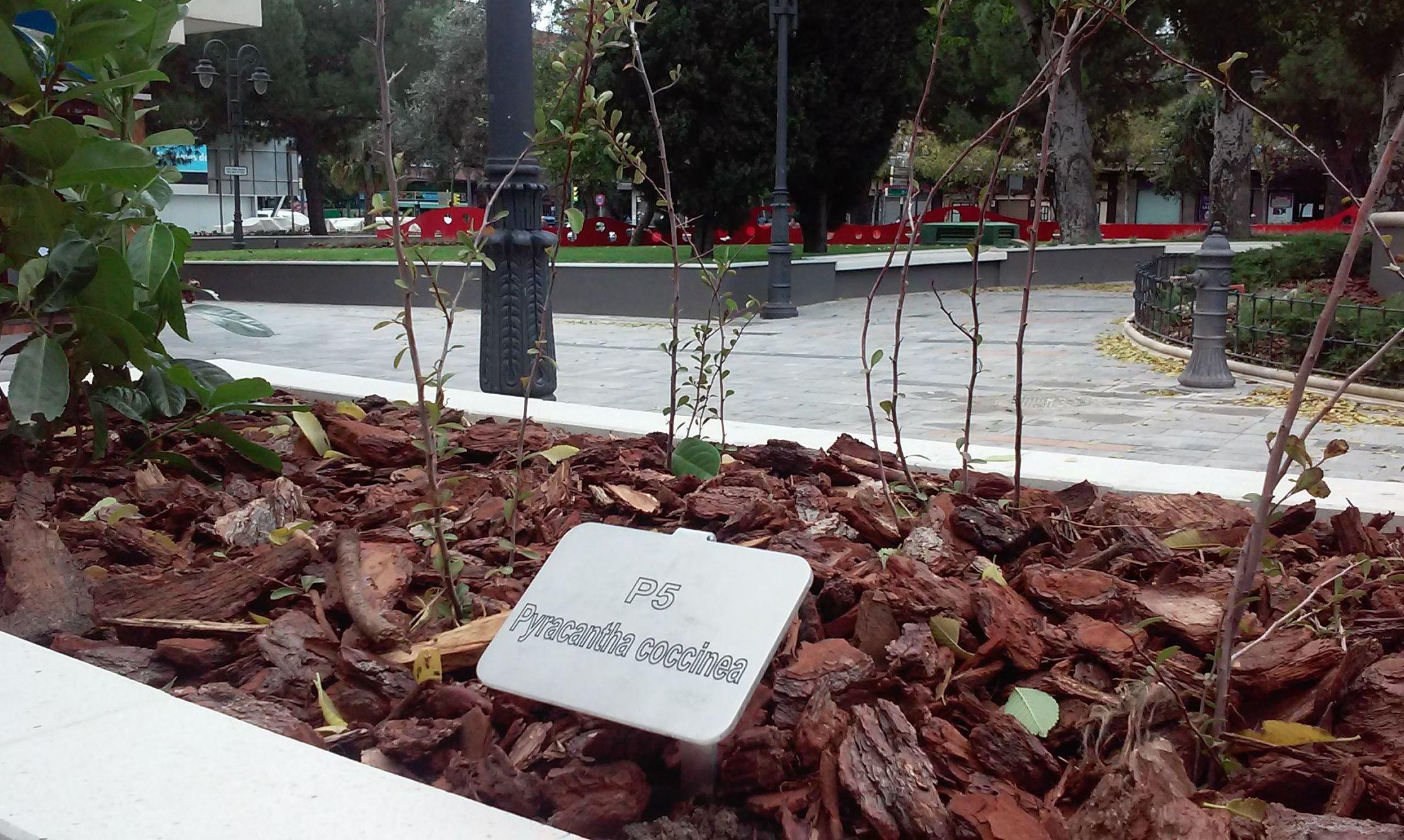 Foto 80 de Diseño y mantenimiento de jardines en  | Danimayos Crea Tu Jardin