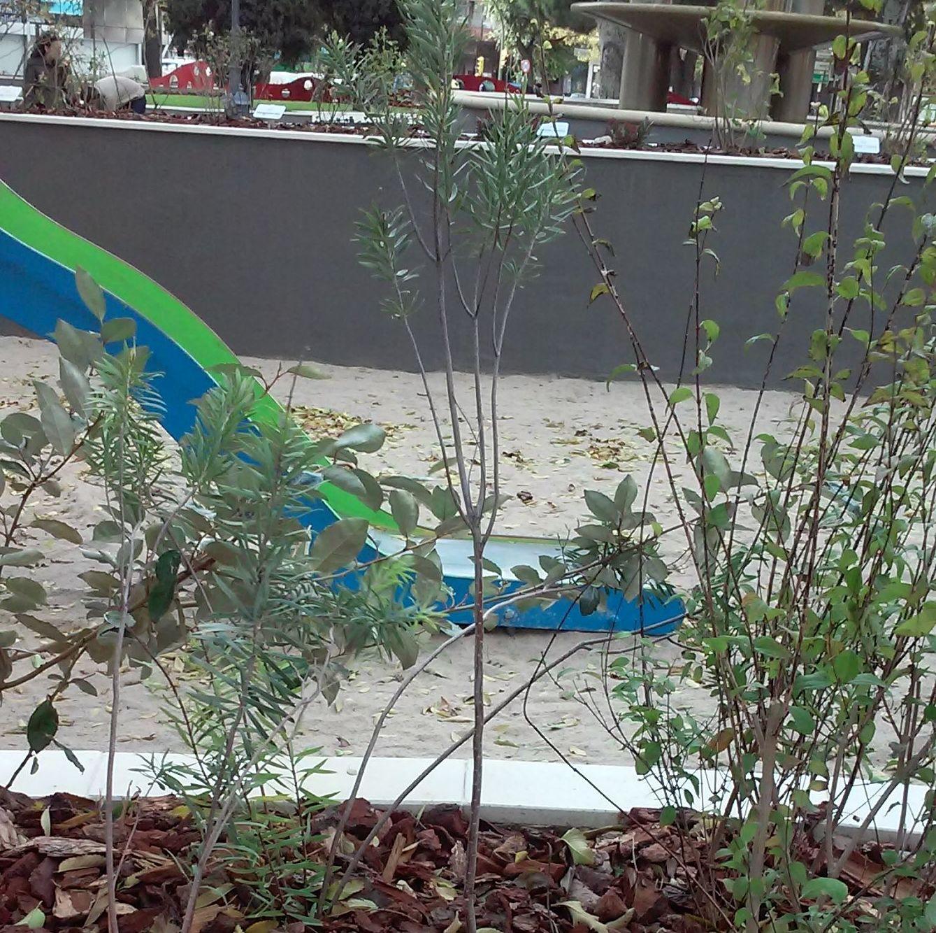 Foto 98 de Diseño y mantenimiento de jardines en  | Danimayos Crea Tu Jardin